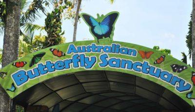 Австралійський Батерфляй. Метелики і коали.
